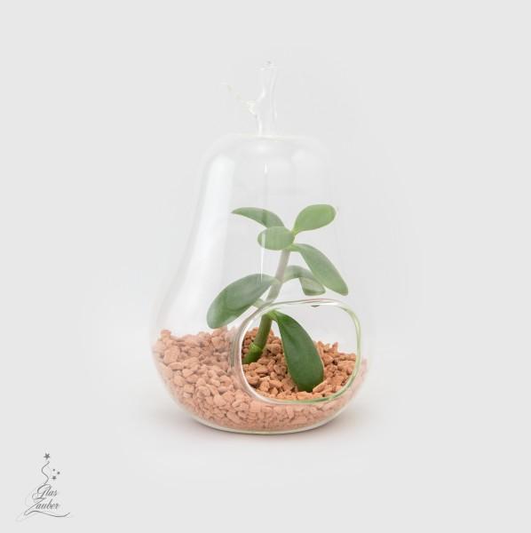 Birne aus Glas mit Pflanze